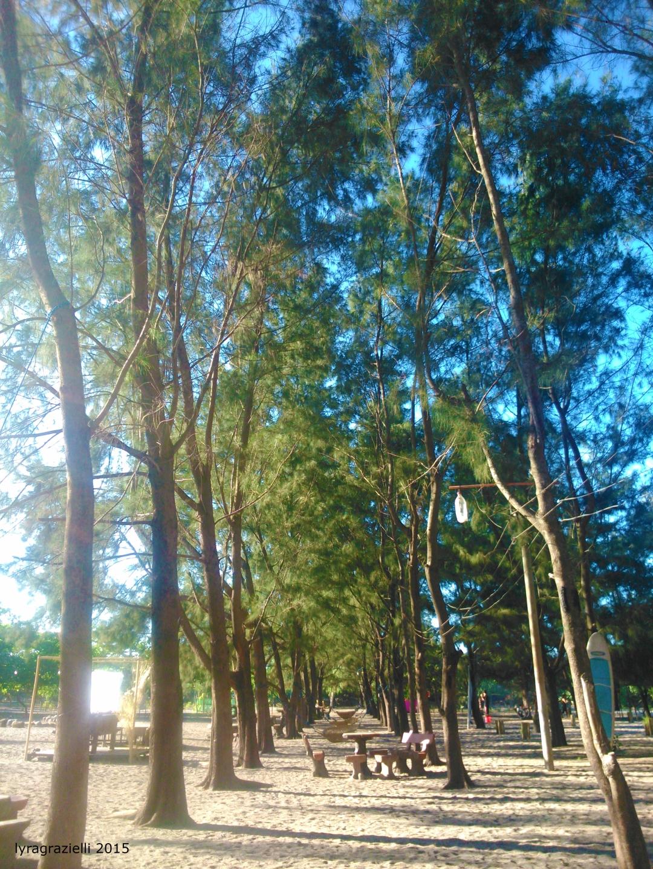 Tree aisle