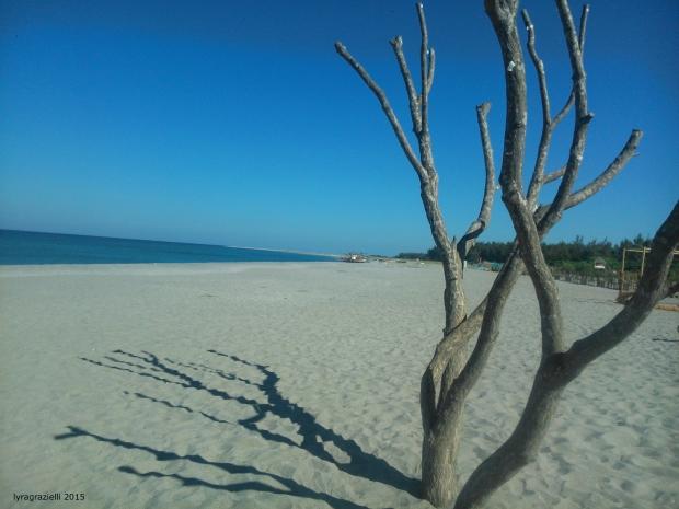 The beach sentinel